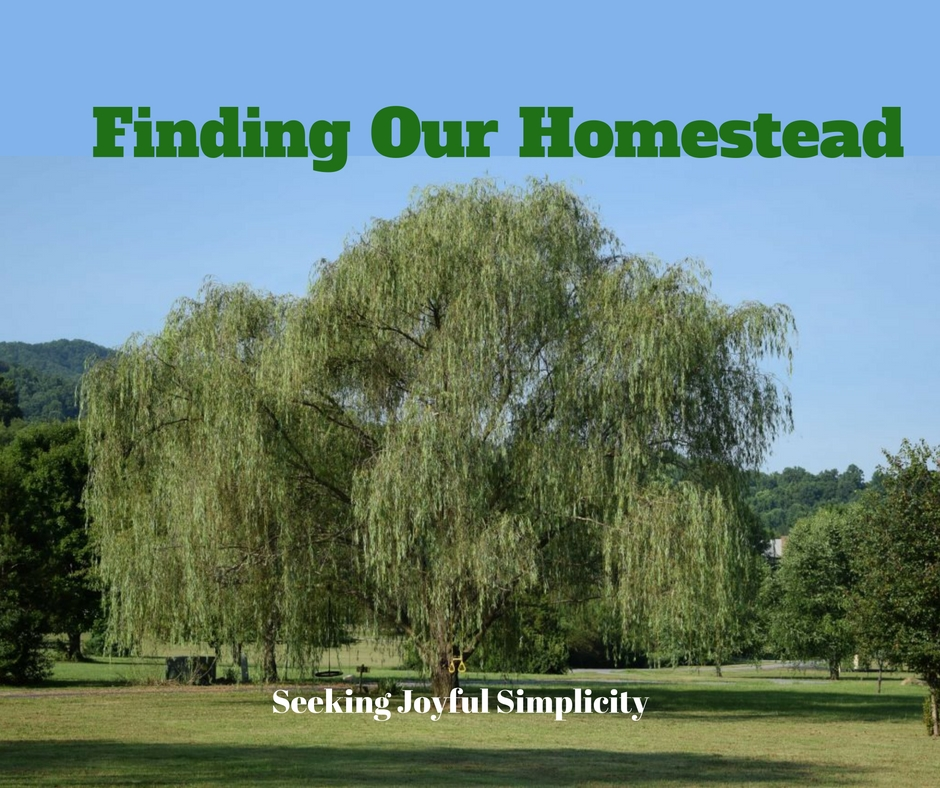 After dreaming for years of starting a homestead, it finally happened. This is our story of finding a homestead. Welcome to Willow Tree Farm.