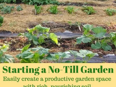 Starting a No-Till Garden