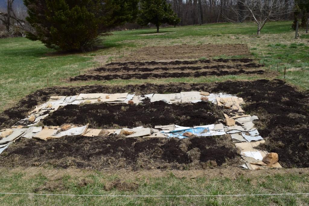 transforming lawn into garden