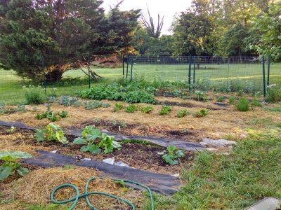 Mid-June Garden