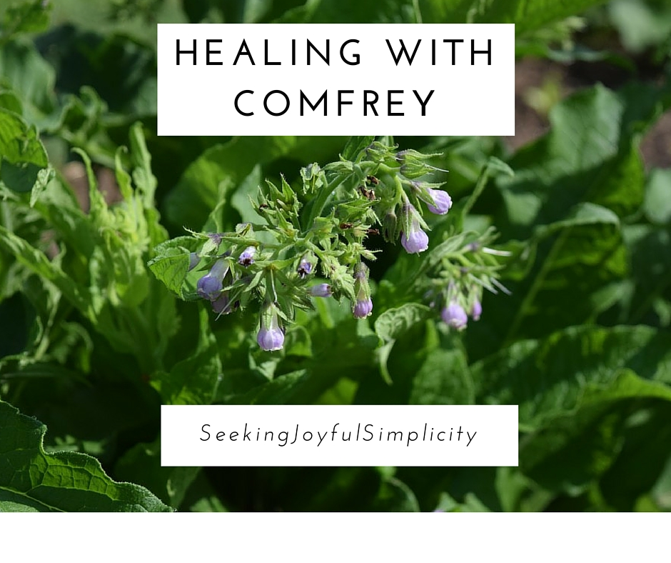 Comfrey is amazing plant that offers powerful wound healing benefits for broken bones, torn ligaments, cuts, bruises, and more.