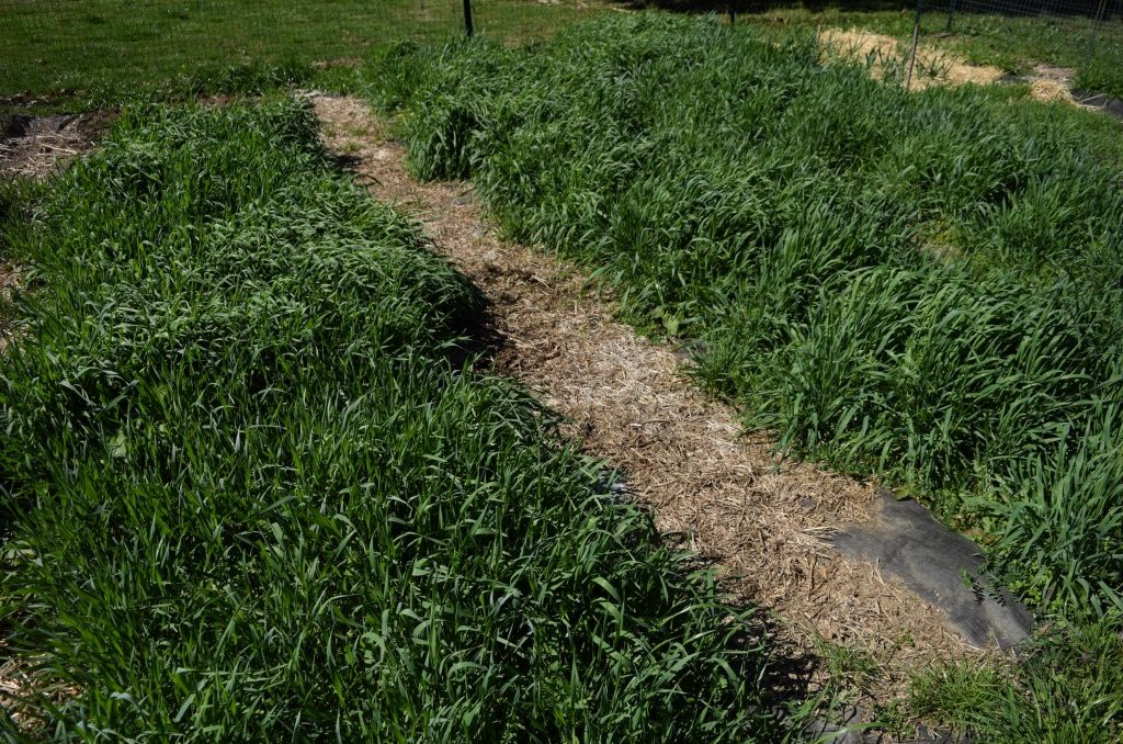 Cover crops are a low-cost, low-maintenance way to improve the soil in your garden and give you bigger and healthier harvests. Cover crops can be included in your annual garden plan, and can be planted in the fall. Learn how to use cover crops.