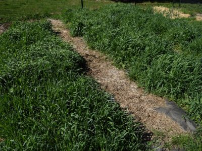 How to Use Cover Crops in the Garden