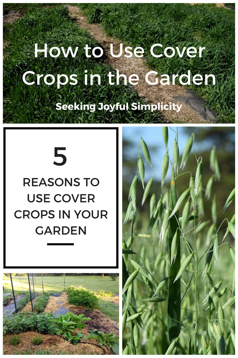 Cover crops are a low-cost, low-maintenance way to improve the soil in your garden and give you bigger and healthier harvests. Cover crops can be included in your annual garden plan, and many cover crops can be planted in the fall. I wish I had discovered cover crops sooner, and I want to share my experience and favorite resources on how to use cover crops in the garden.