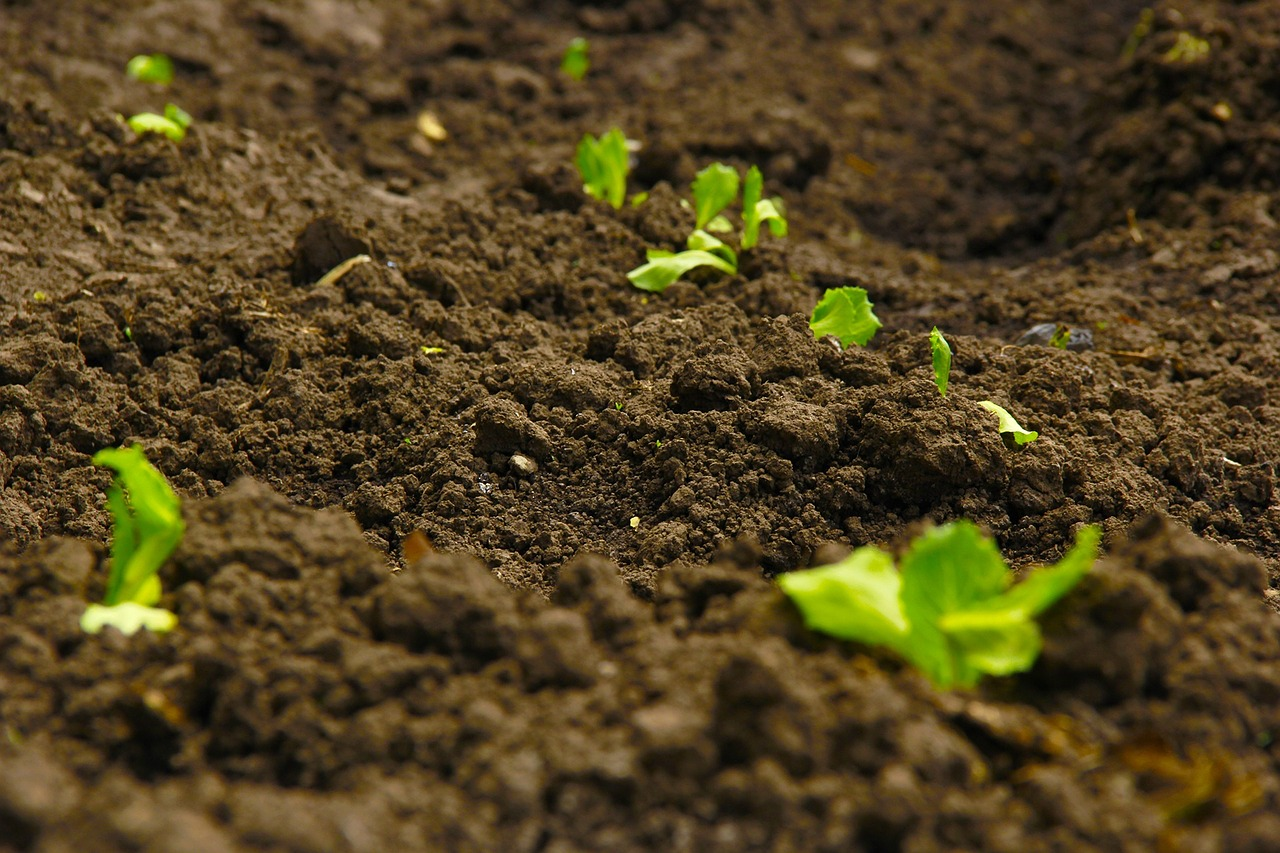 Soil quality and how to improve garden soil balancing soil nutrients and ph.