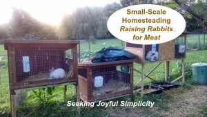 Small-Scale Homesteading, Raising Rabbits for Meat