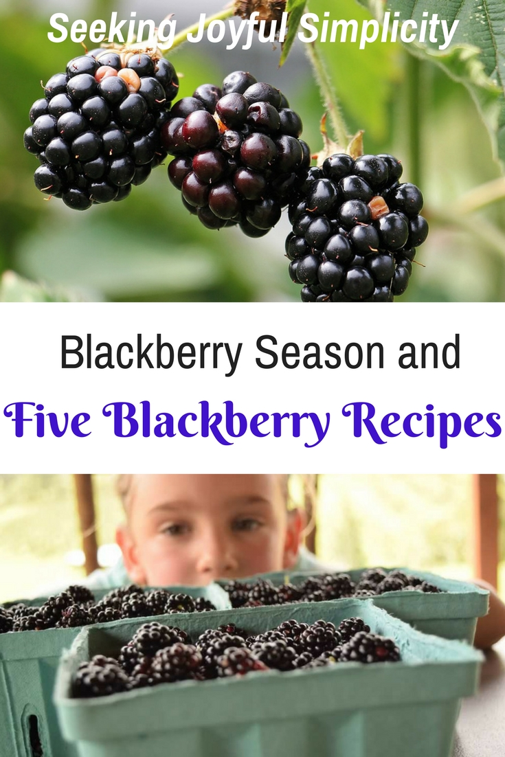 Blackberries are a sweet summer berry and endlessly versatile. Learning to enjoy seasonal foods, we have found freezing fresh blackberries to be a wonderful way to preserve the freshness of summer to enjoy all year long. Let me share five easy and delicious blackberry recipes including a gluten-free blackberry oat bar, wild berry buckle (coffe-cake like), vanilla lavender blackberry jam, blackberry mead, and blackberry cobbler.