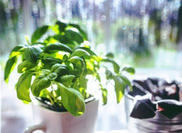 Not just for pesto and pasta, let's talk about how to use fresh basil to make lime basil fizz, basil herb butter, basil vinegar, and more.