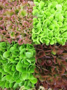 Love Fresh Vegetables? Find a CSA Near You!
