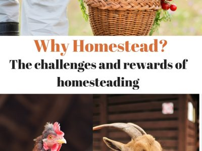 Homesteading Lifestyle – Self-Empowerment