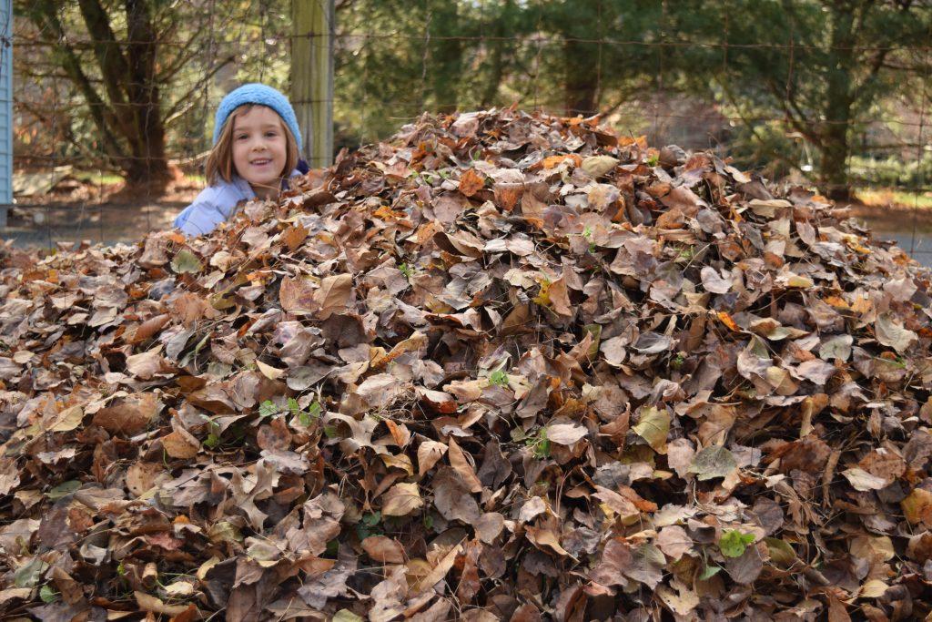 leaf pile 2016