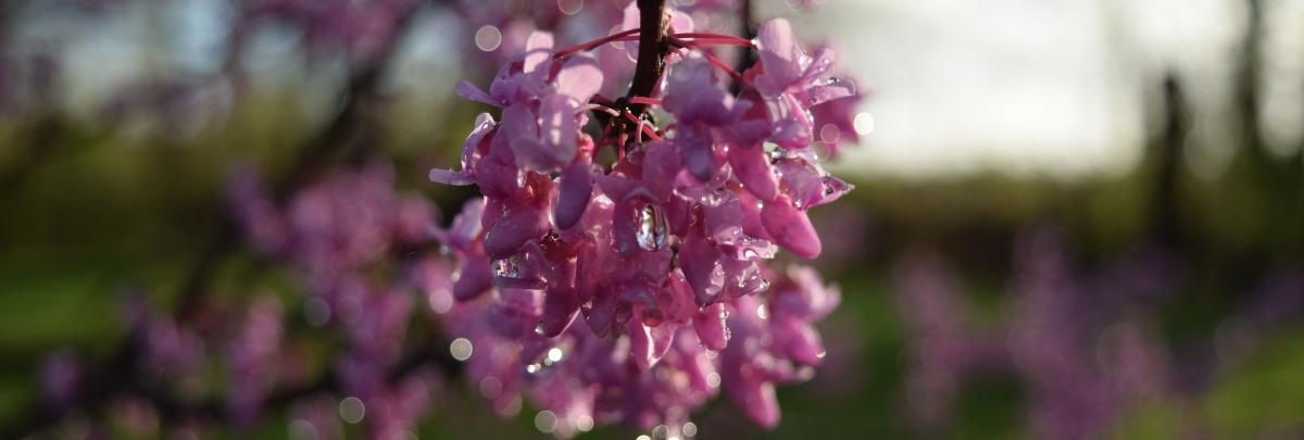 Rain Flowers 1