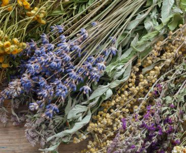 Dehydrators allow you to quickly and gently dry your herbs. Here are the biggest advantages to using a dehydrator to preserve your herbs