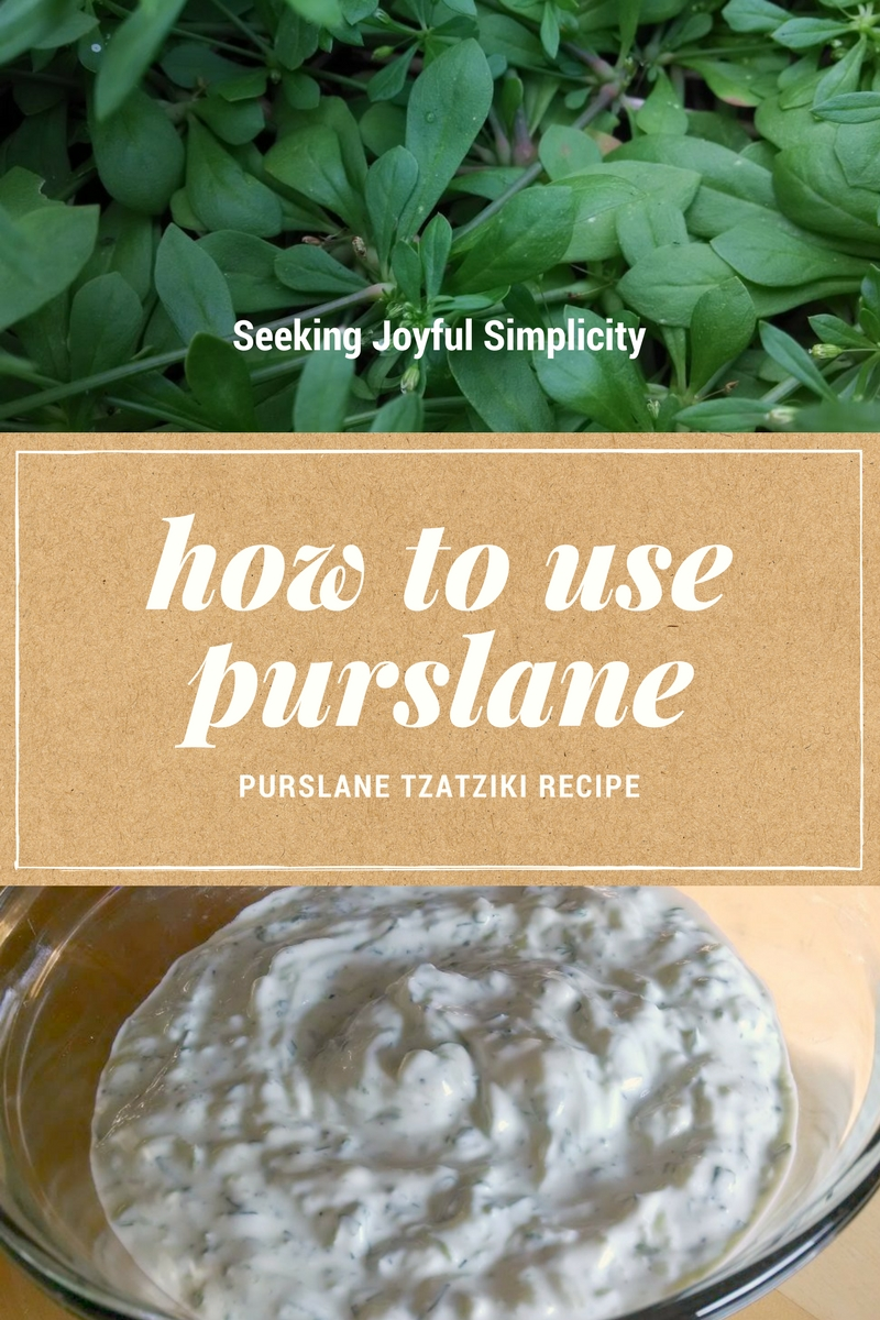 Purslane Tzatziki. I love the combination of dill, cucumber, and purslane mixed with yogurt and sour cream. Great for dipping vegetables, and as a dressing for salads, sandwiches, and meats.