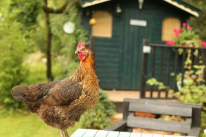 Homesteading and self-sufficiency books