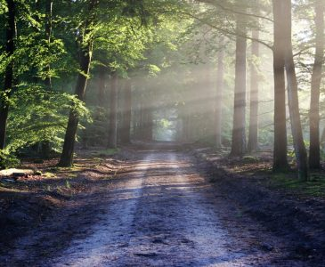 Positive Ways to Start the Day - Best Ways to Start Your Morning