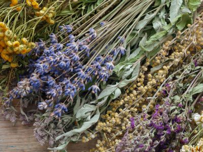 How to Dry Herbs In a Dehydrator