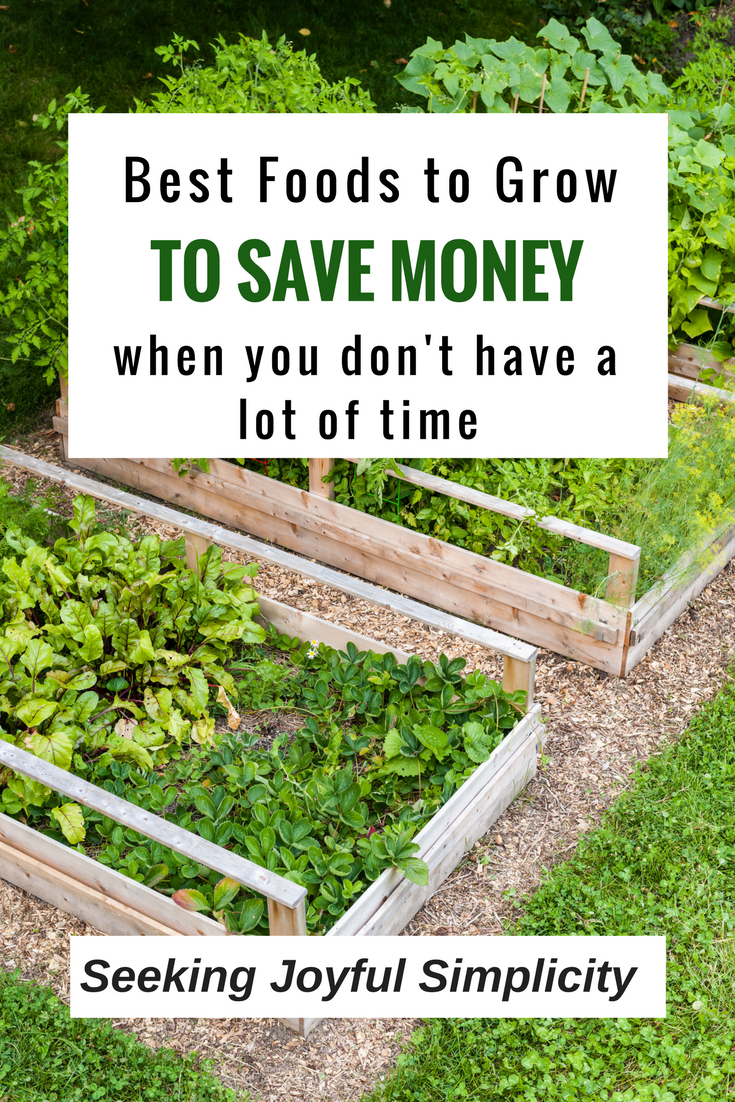 This is a simple list of the best foods to grow to save money when you don't have a lot of time. Easy to grow, long lasting, and easy storage.
