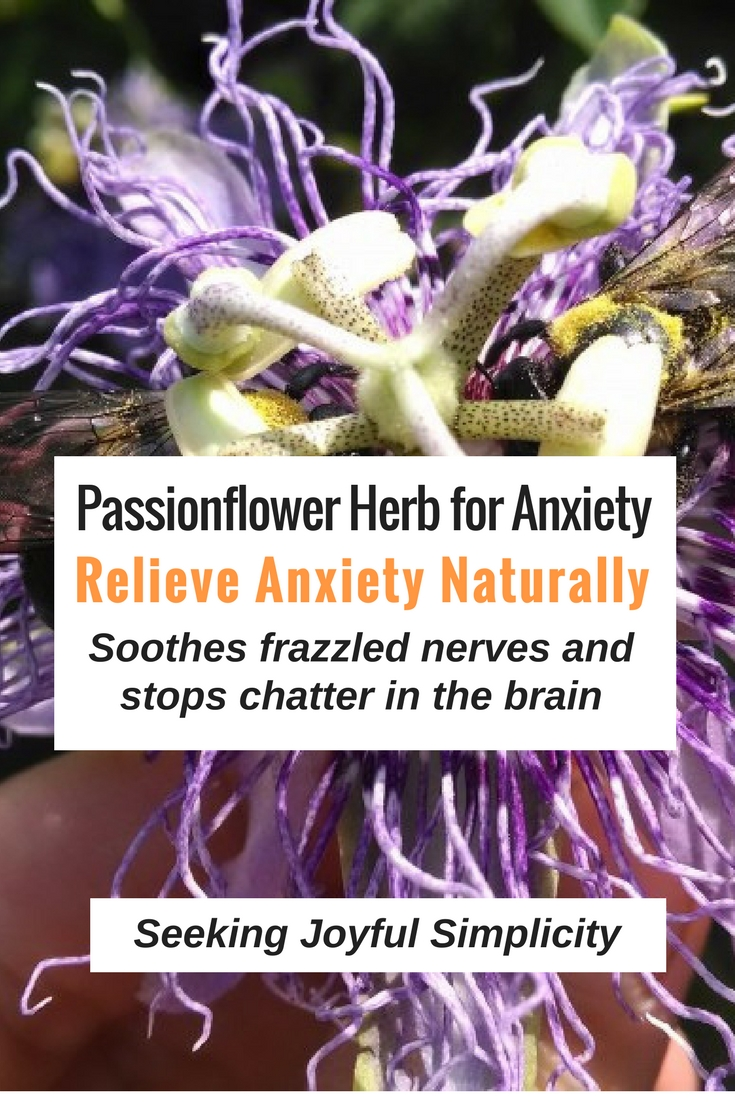 Feeling anxious, edgy, and you can't stop thinking about your worries, the beautiful passionflower herb can bring you back to feeling centered and calm. Let me share the benefits of passionflower and how to use passionflower to soothe your frazzled nerves.