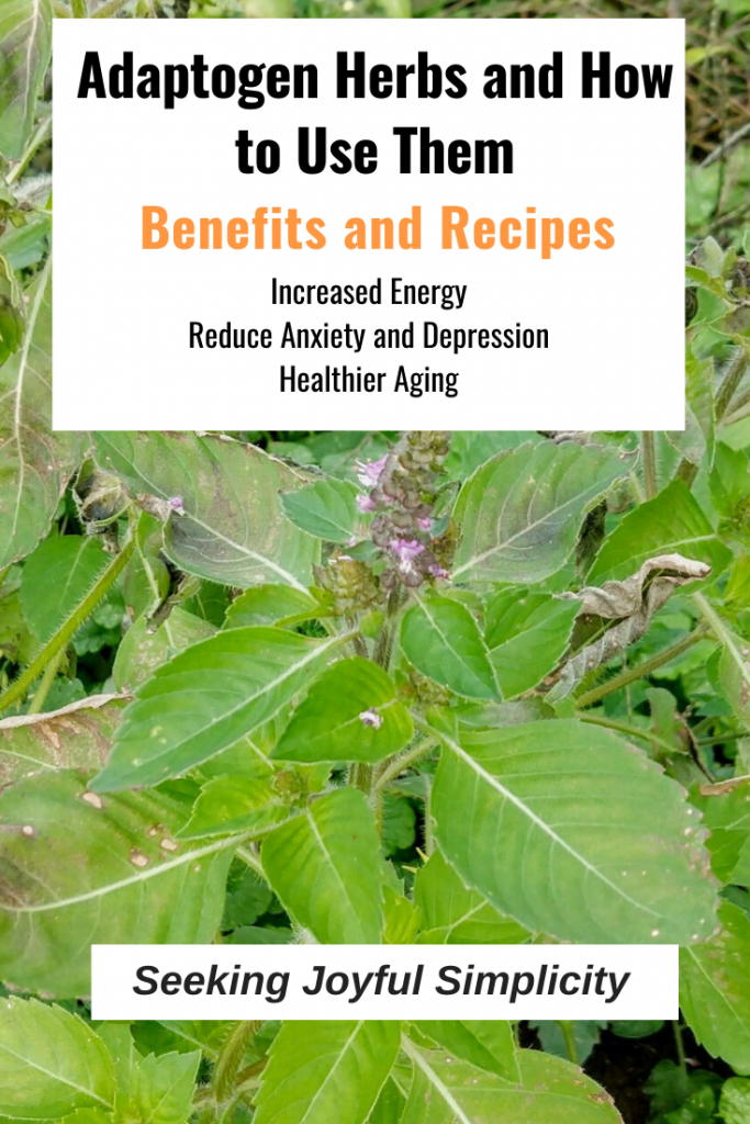 Research demonstrates the many benefits of adaptogen herbs including increased energy, reduced stress, anxiety, and depression, and improved aging. Learn how to use adaptogen herbs and adaptogen recipes.